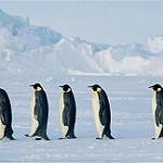 南極のペンギン