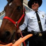 人参を食べる馬