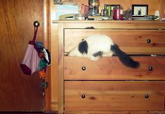 猫が入り込もうとするタンスの引き出し