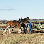鋤を引く馬