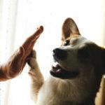 人間とハイタッチする犬