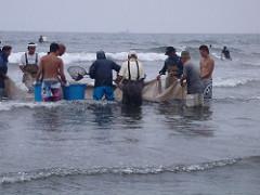 地引網で魚を捕る漁師たち