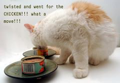 チキン味の猫缶を食べる猫