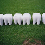 いくつかの歯を模造した工芸品