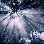 太陽の光線が木の葉を突き抜けている写真