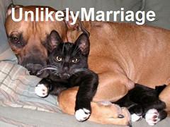 犬と猫のカップルの写真。unlikely marriageと書かれています。