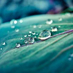 木の葉の上の水のしずく