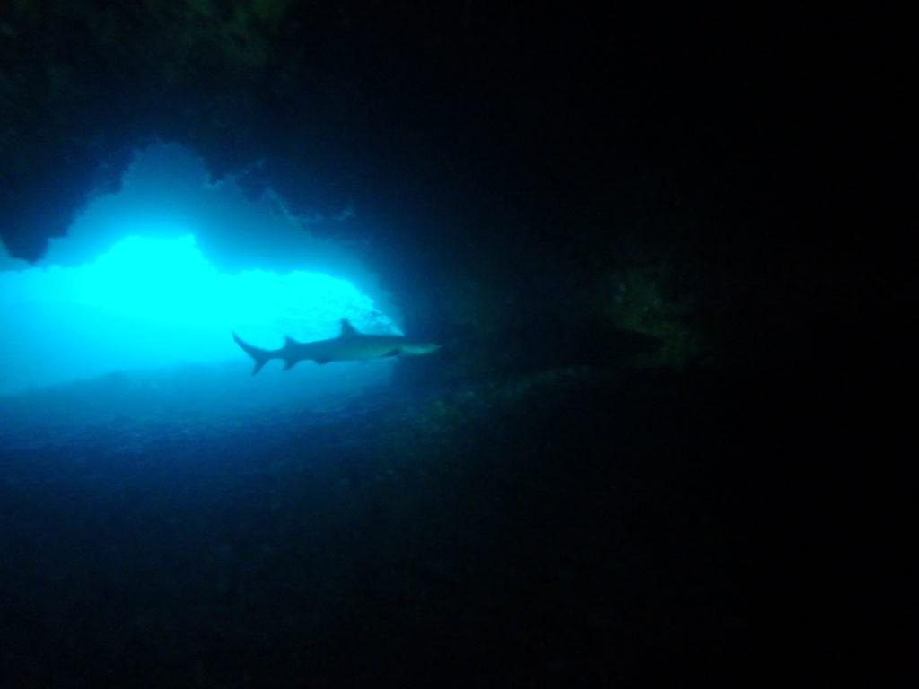 海底洞窟にいたホワイトチップシャーク