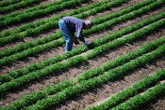 畑仕事をする農民