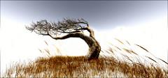 風になびいて曲がったように見える木