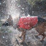 水に濡れた犬