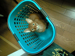 洗濯カゴの中の猫