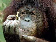 木の実を手に取ってじーっと見つめる猿