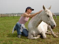 白い馬の体をさすっている女性