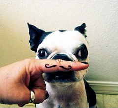 犬の鼻に人差し指をおいて髭を作っている写真