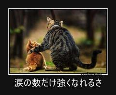 大人猫が子猫を励ましているように見える写真。テロップに『涙の数だけ強くなれるさ』と書かれています。