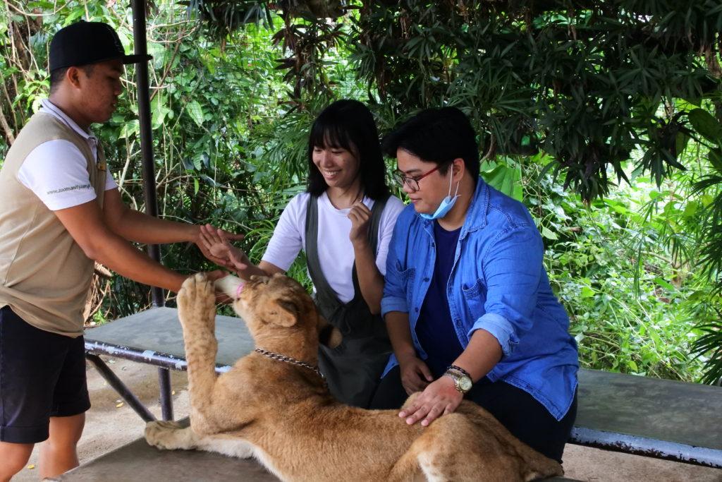 子供ライオンにミルクを与える若い女性2人