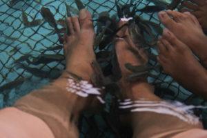 足の角質を掃除するお魚たち