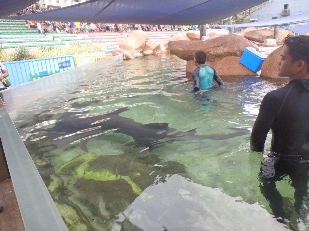 水槽の中を泳ぐサメ
