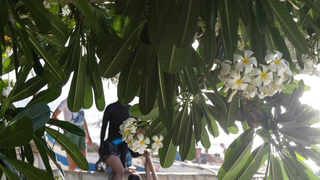 綺麗な花の向こうに見えるスイミングスーツの女性たち